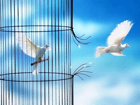 Doves escaping from a cage